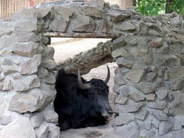 Корова в окне №45172