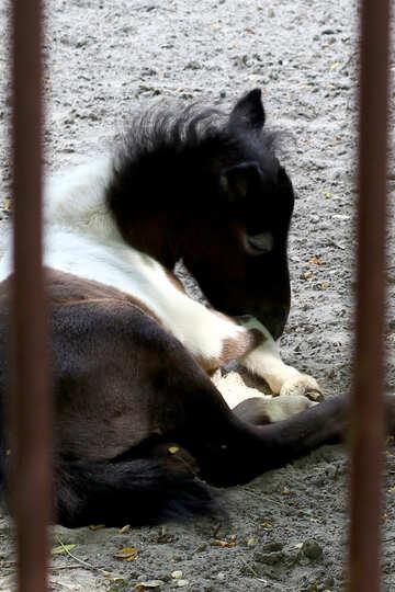 Little horse №45874