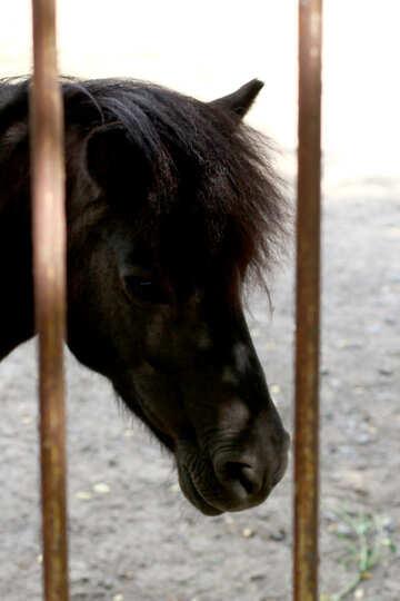 Little horse №45875