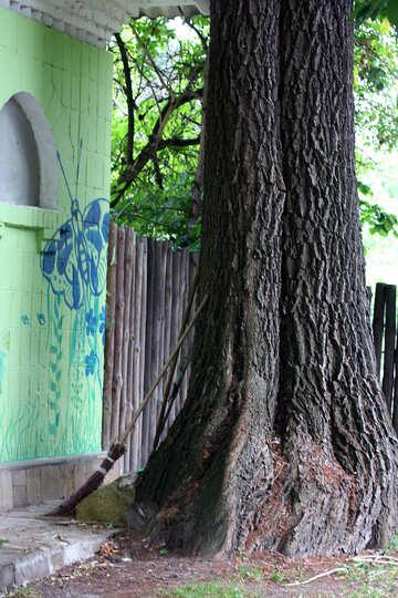Broom near a tree №45936