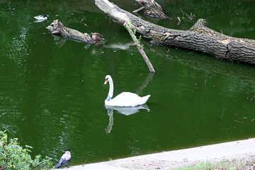 Bird on the water №45977