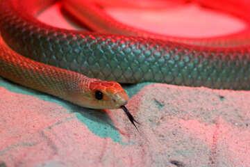 Snake head №45786