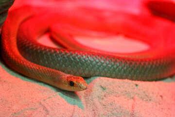 Snake head №45787
