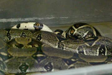 Many snakes №45785