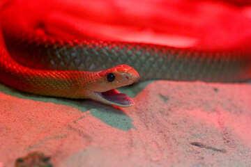 Snake head №45789