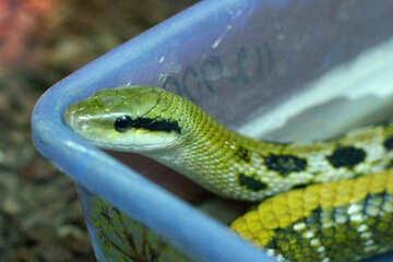 Snake head №45794