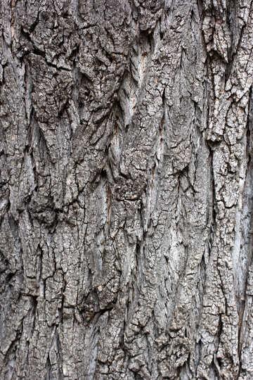 Bark of tree №45929