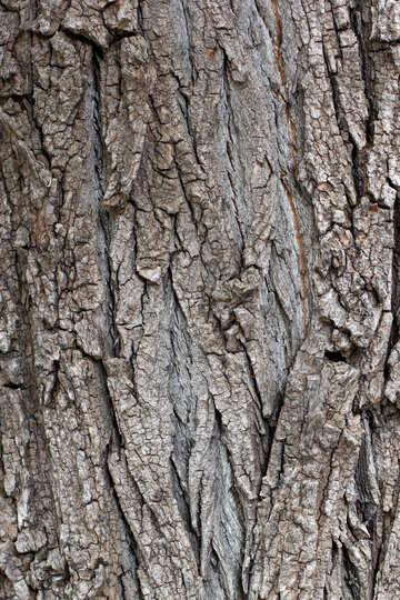 Bark of tree №45932