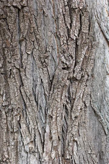 Bark of tree №45933