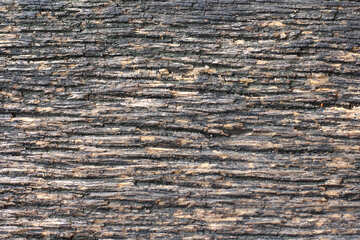 The texture of wood fibers