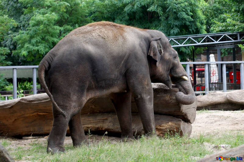 Elephant №45841