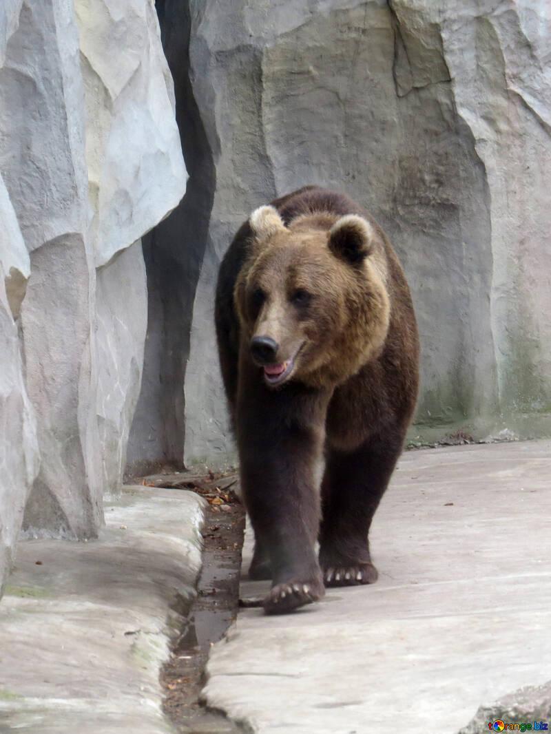 Bear №45256