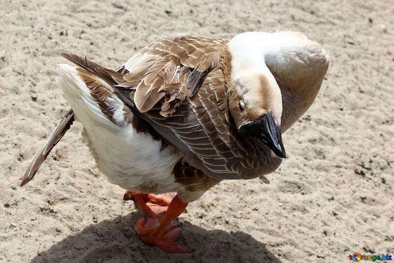 Grey Goose №45903