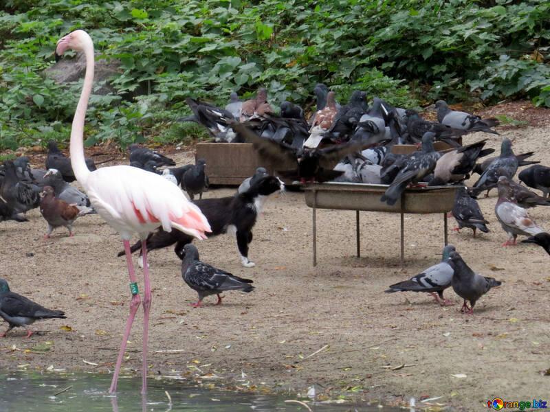 Фламинго в зоопарке №45313