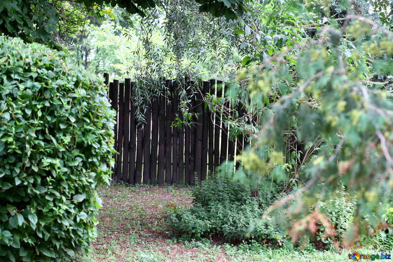 Fence in the forest №45935
