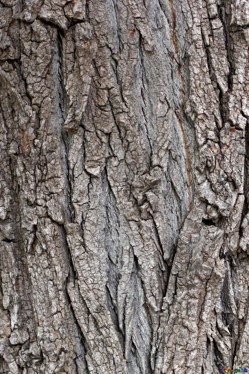 Corteza de árbol №45932