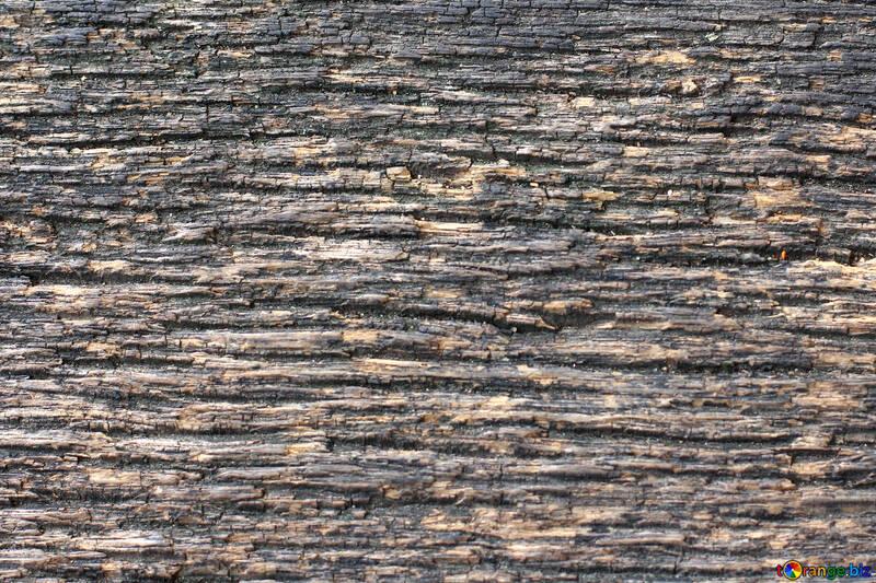 The texture of wood fibers №45801