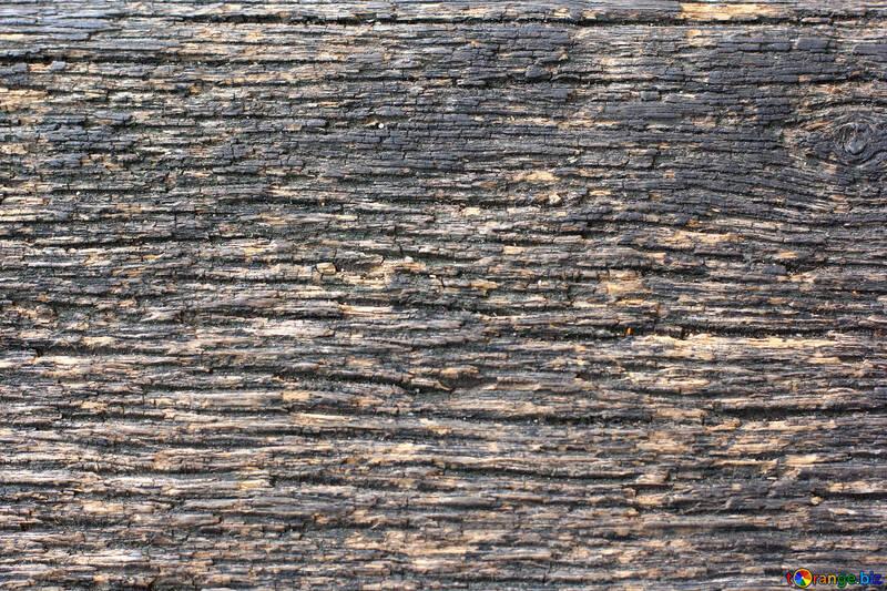 The texture of wood fibers №45802