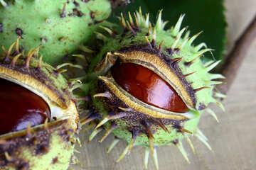 Autumn fruits horse chestnut №46410