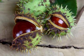 Autumn fruits horse chestnut №46411