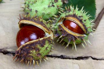 Autumn fruits horse chestnut №46413