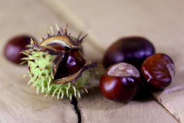 Horse-chestnut fruit №46492