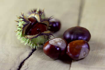 Horse-chestnut fruit №46493