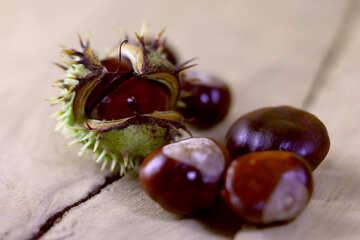 Horse-chestnut fruit №46494