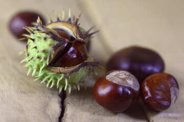 Horse-chestnut fruit №46497