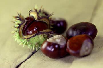 Frutta ippocastano №46498