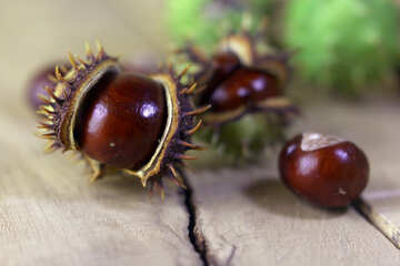 Beautiful conker on a wooden background №46470