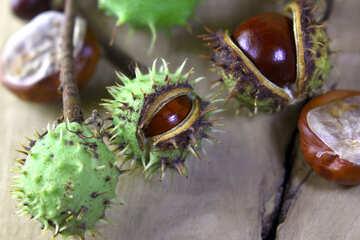 Beautiful horse chestnut №46440