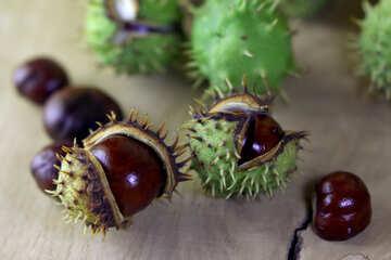 Horse-chestnut fruit on wooden background №46474