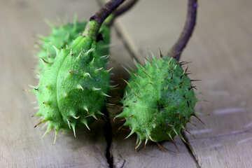 Horse-chestnut fruit on wooden background №46480