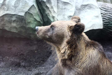 Bear portrait №46050