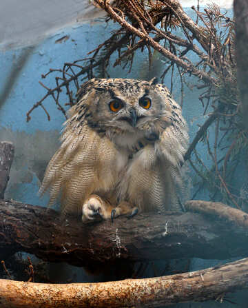 Owl №46063