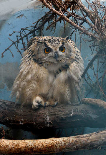 Owl №46064