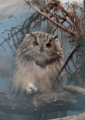 Owl №46065