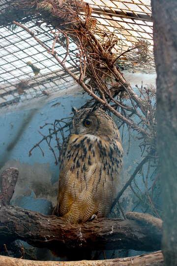 Owl №46073
