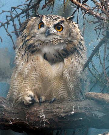 Owl eyes №46062