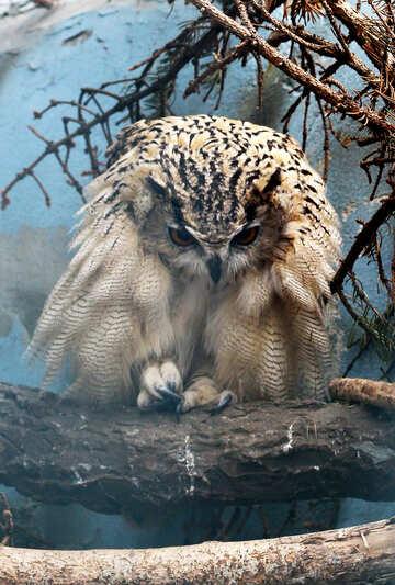 Paws owl №46061
