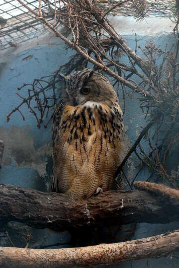 Owl №46072