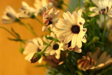 Bella autunno bouquet №46860