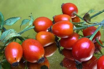 Berry wilde Rose auf einem goldenen Hintergrund №46519