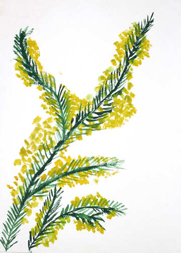Children`s drawing a sprig of mimosa №46289
