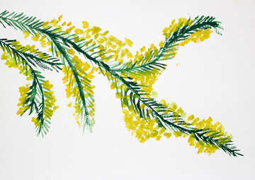 Children`s drawing a sprig of mimosa №46288