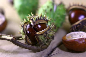 Beautiful picture with conker №46441