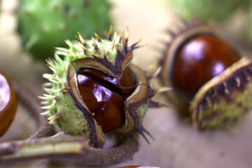 Beautiful picture with conker №46448