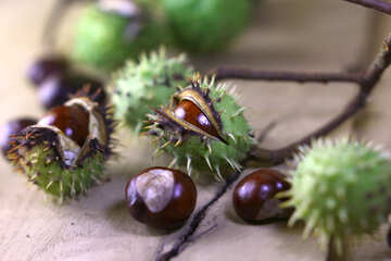 Beautiful picture with conker №46449