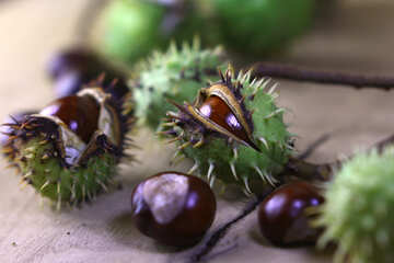 Beautiful picture with conker №46450